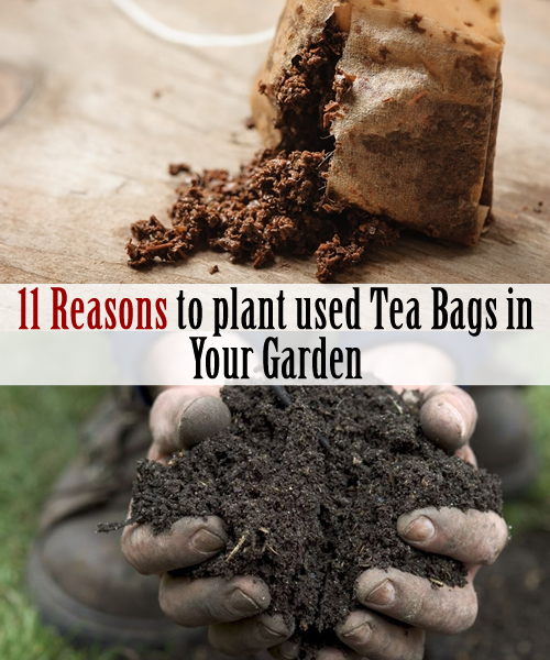 11 reasons to plant used tea bags in your garden