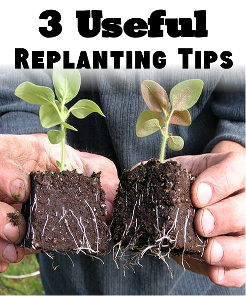3 Useful replanting tips