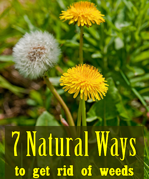 7 natural ways to get rid of weeds garden addiction for How to get rid of weeds in garden