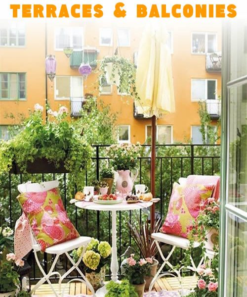 Ideal plants for terraces and balconies