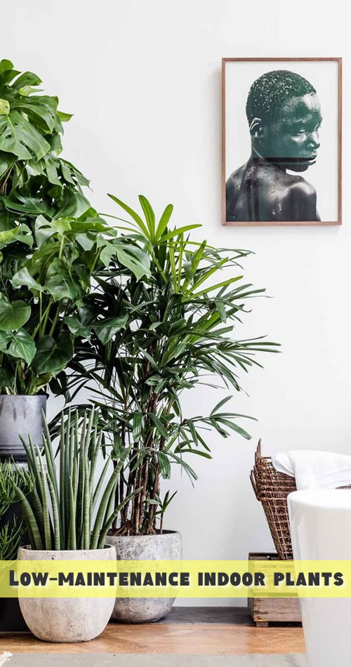 Low maintenance indoor plants garden addiction for Low maintenance indoor plants