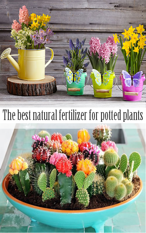 The best natural fertilizer for potted plants garden addiction - Best compost for flower pots solutions within reach ...
